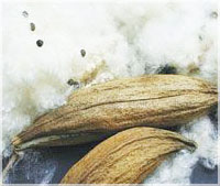 Kapock stuffing 100% natural, and longer lasting than cotton batting